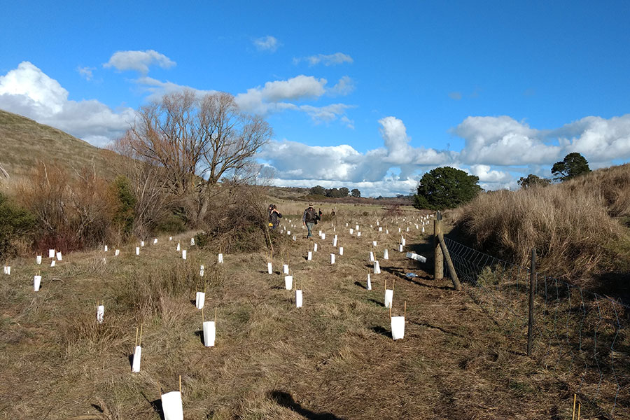 Revegetation in Victoria